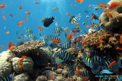 KHÁM PHÁ HÒN BẢY CẠNH (Câu cá, lặng biển ngắm san hô)