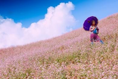 Đông Bắc : Mùa hoa tam giác mạch